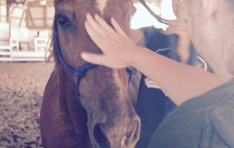 Hope, Healing, and Horses