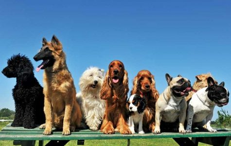 The dogs of West