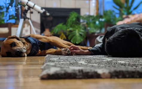 (Jan 22) Kenton Huynh, and a canine friend named Tyke share a little moment while waiting to be called to dinner. (Feature)