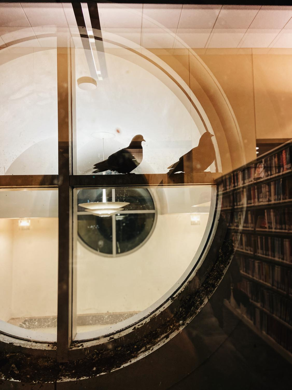 Two+pidgeons+seek+shelter+from+the+cold+in+an+alcove+between+the+exterior+walls+of+the+Iowa+City+Public+Library.+%28free+form%29