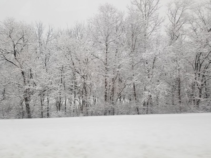 A section of trees covered in snow.