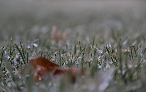 After freezing rain, almost every blade of grass in trapped in a layer of ice. The crunching of ice under your shoes provides a soothing experience. (Worms Eye)